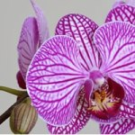 Offres d'emploi de fleuriste