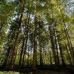 Le métier d'ingénieur forestier