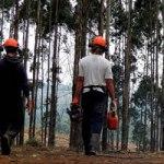 guide métiers de la forêt