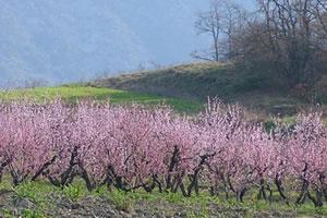 Licence pro transition agro-écologique