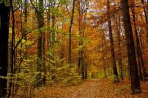 BTSA GF : Gestion Forestière