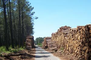 commercialisation des produits forestiers