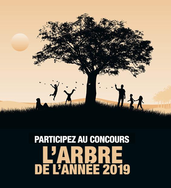 concours l'arbre de l'année