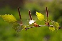 BAFA créer dans la nature