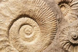 master paléontologie