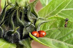 master BEE biologie écologie évolution