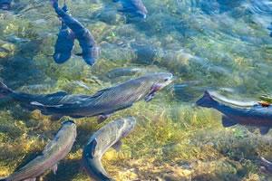 Licence Pro Aquaculture et environnement littoral