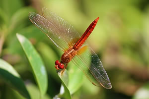 master biodiversité apprentissage
