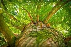 alternance gestion espaces naturels