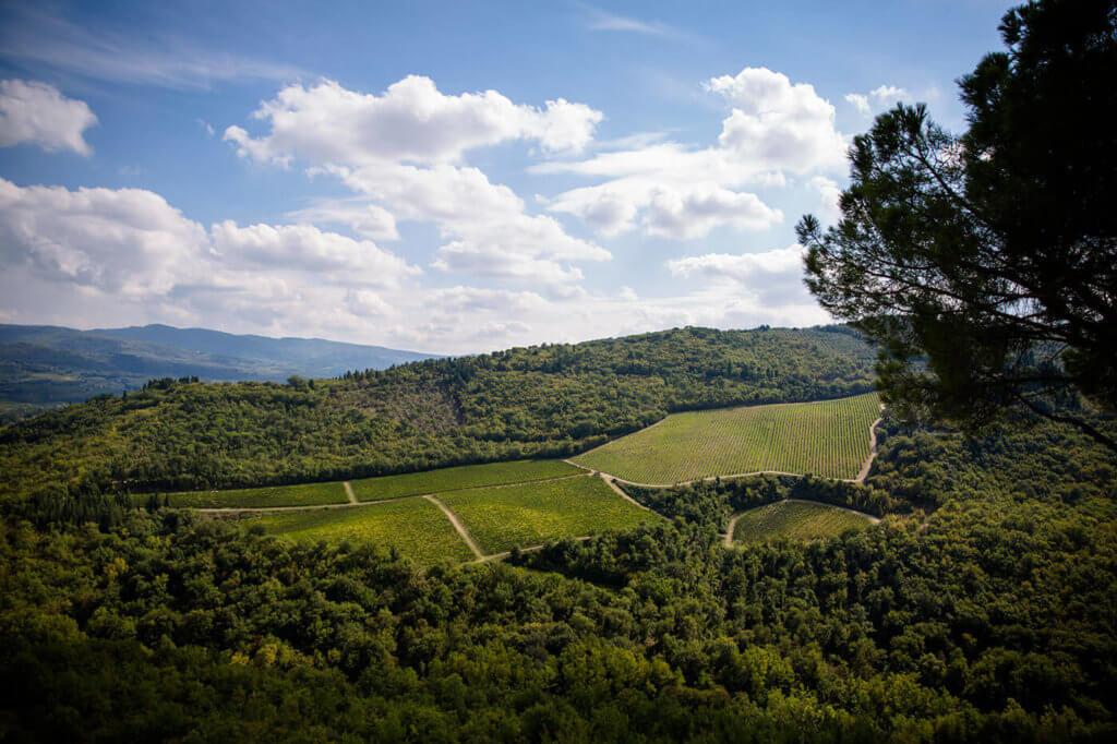 Panorama from Castello Vicchiomaggio