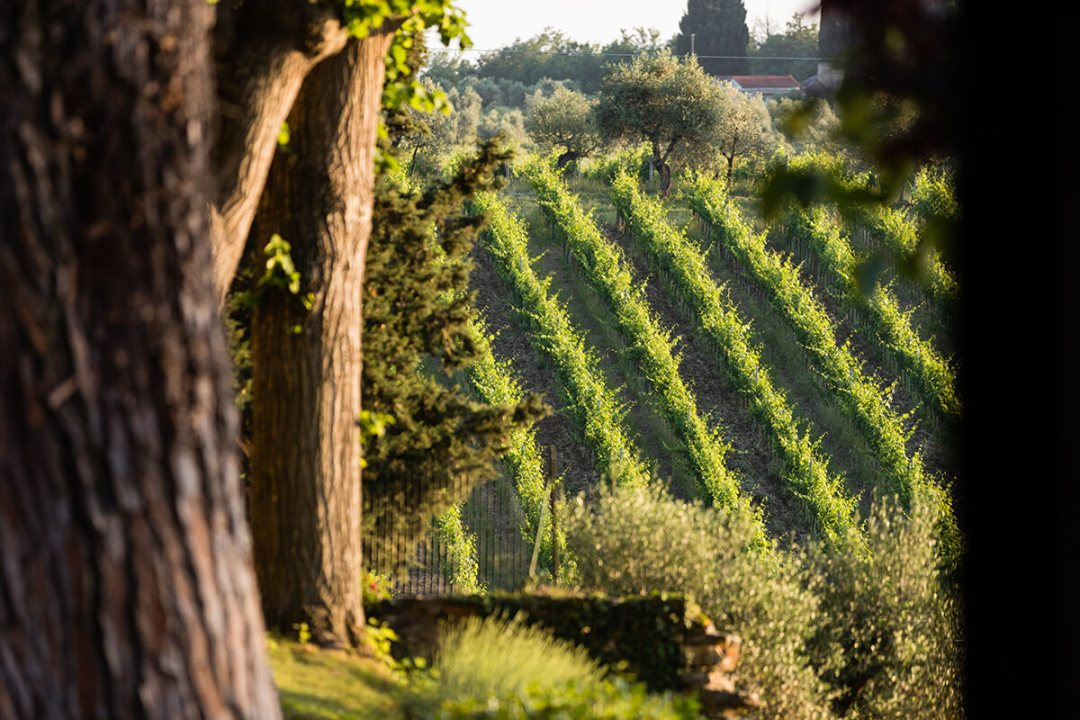 Wedding overlooking tuscan vineyards