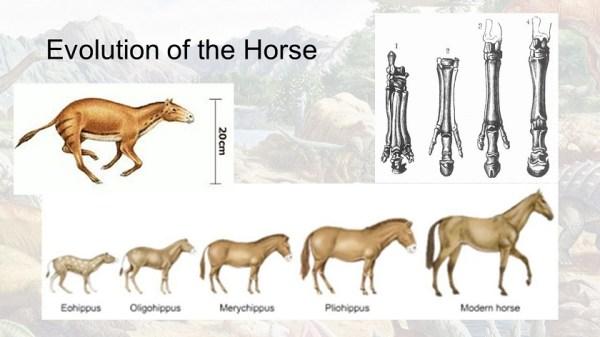 Эволюция в картинках - origins.org.ua