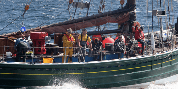 Orkney sea angling