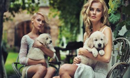 Mind the Benefits of a Furry Companion