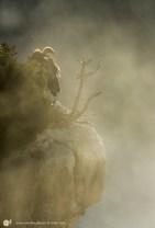 Vautour fauve - © Gilles Adt