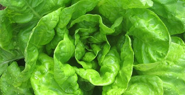 salata_640