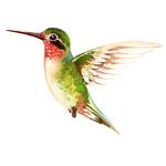 colibrí comunicació