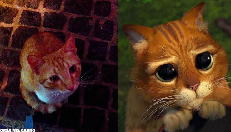 gatto-shrek-occhi-tristi