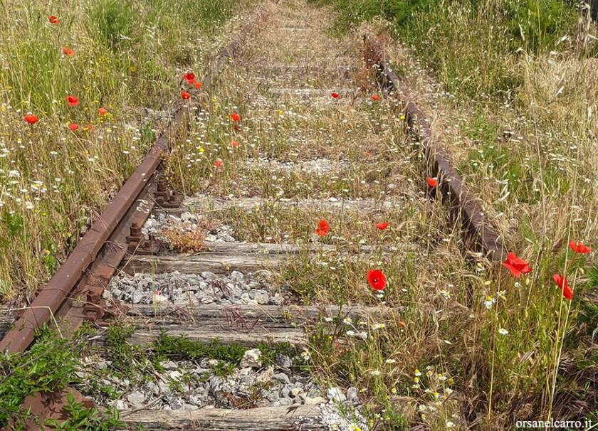 Trekking lungo la ferrovia abbandonata Sicignano Lagonegro