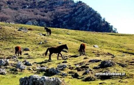 PARCO DEL POLLINO - Cavalli al pascolo ai Piani di Pollino