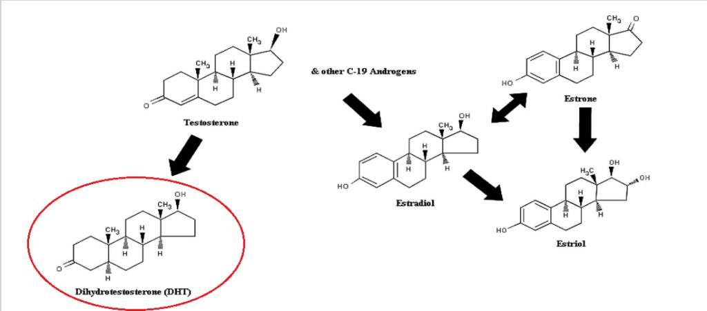 testosteron molekülünden biyo sentez ile sentezlenen moleküller