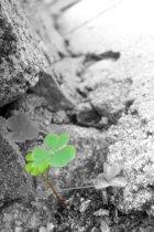clover_by_la34-d2ymiwk