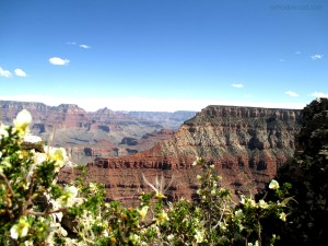 Grand Canyon - flowers