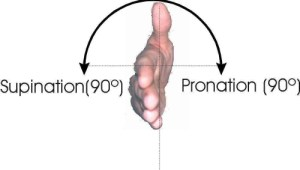 Pronation and Supination 500x284