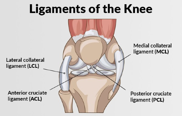 illustration of ACL, PCL, MCL