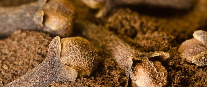 Plant in de kijker: Kruidnagelboom