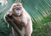 ブロンクス動物園はディズニーランドのような超一流テーマパークでした