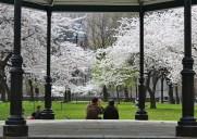 日米友好の桜が咲く歴史的な公園「サクラ・パーク」