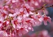 セントラルパークで桜が楽しめるお花見スポット