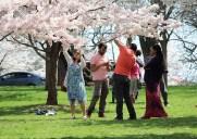 ブランチ・ブルック・パークの桜(2015年)