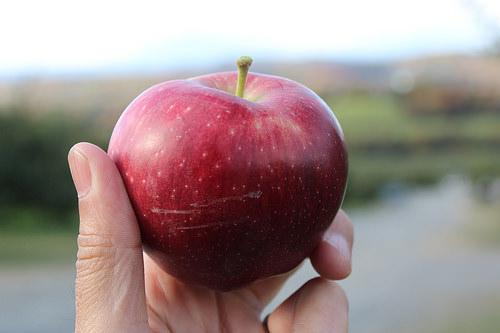 秋は人気果樹園「Masker Orchards」でリンゴ狩りを楽しもう