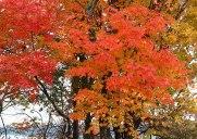 ニュージャージーの紅葉の名所「パリセイズインターステートパーク」