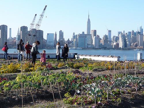 Roof Top Farm - ブルックリンで話題の屋上農園