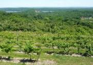 Benmarl Winery – ワインテイスティングが楽しめる全米最古のブドウ園