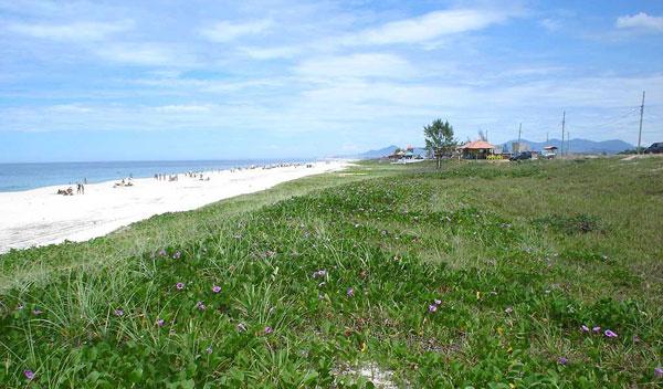 A belíssima praia de Vilatur, em plena APA da Massambaba, com areias branquíssimas e a vegetação nativa, com as batateiras em flor. Foto: Ivan Mattos.