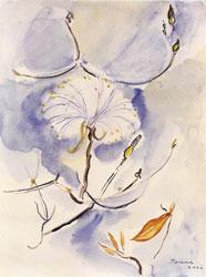 Aquarela de Tiziana Bonazzola