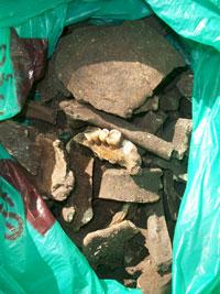 A ossada recolhida pelo morador que descobriu  o sambaqui na Mombaça