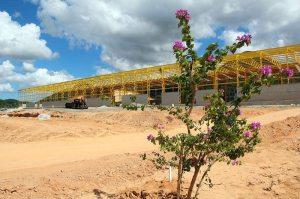 Buganvilles em frente à fábrica em construção.