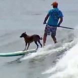 O cão Parafina e Picuruta Salazar dividem a prancha para curtirem juntos o mar do litoral paulista (foto: Divulgação)
