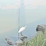 Contraste na Lagoa de Saquarema, a beleza da garça foi ofuscada pelos dejetos de esgoto in natura boiando livremente e se espalhando por toda parte (Foto: Paulo Lulo)