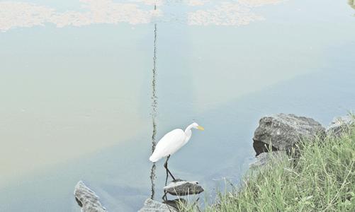Subcomitê da Lagoa de Saquarema debate demandas ambientais