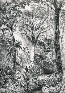 """""""Caçada em Mata Virgem"""", do livro Viagem Pitoresca através do Brasil, de Rugendas"""