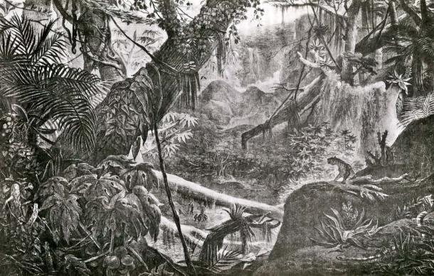 Mata Atlântica na serra, desenhada pelo francês Jean Baptiste Debret