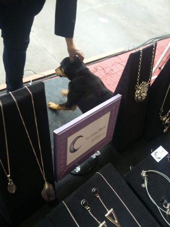Este cachorro ficou com medo da chuva no sábado e recebeu carinho na La Lune Bijou!