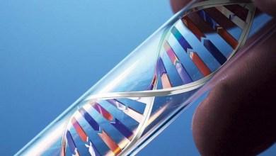 ДНК, теломеро и остаряване на организма