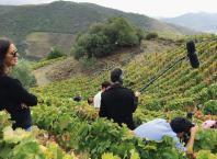 Filme sobre o vinho português mostra Casa Ermelinda Freitas e Festa das Vindimas